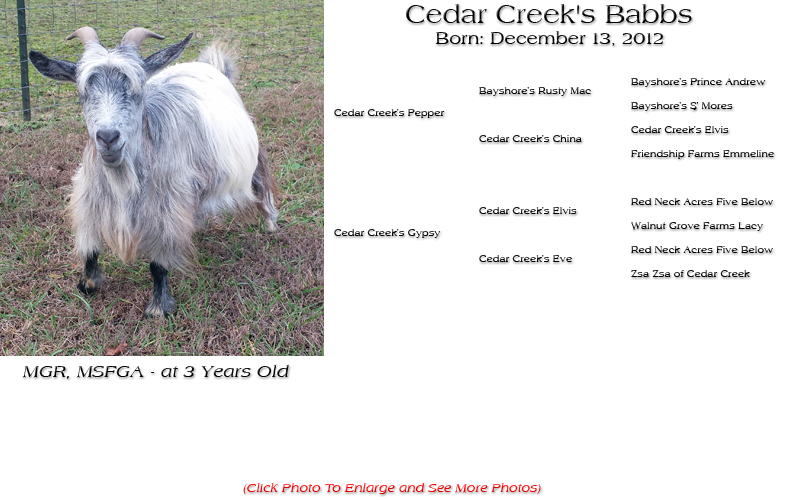 Silky Doe - Cedar Creek's Babbs