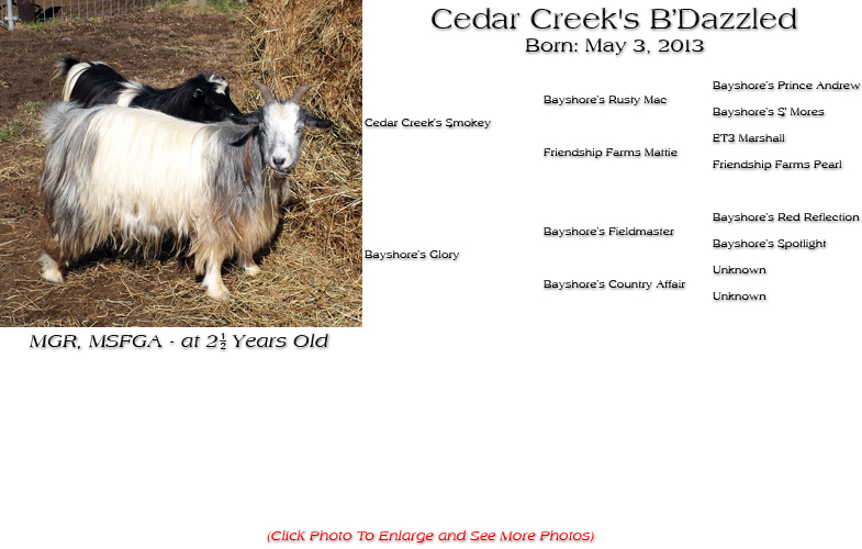 Silky Doe - Cedar Creek's B'Dazzled