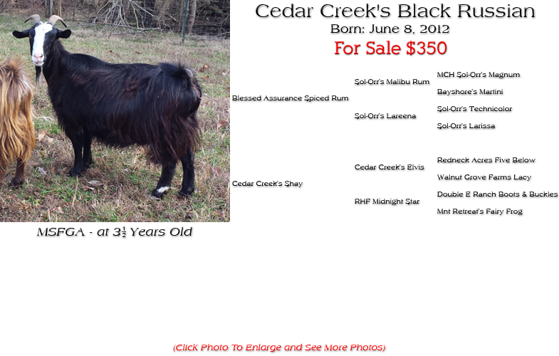 Silky Doe - Cedar Creek's Black Russian