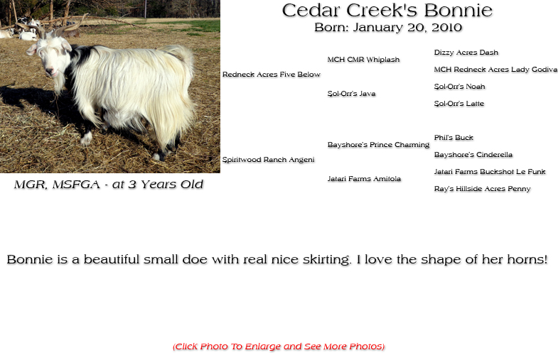 Silky Doe - Cedar Creek's Bonnie - Bonnie is a beautiful small doe with real nice skirting. I love the shape of her horns!