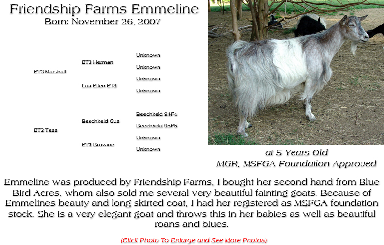Silky Doe - Friendship Farms Emmeline - Emmeline was produced by Friendship Farms, I bought her second hand from Blue Bird Acres, whom also sold me several very beautiful fainting goats. Because of Emmelines beauty and long skirted coat, I had her registered as MSFGA foundation stock. She is a very elegant goat and throws this in her babies as well as beautiful roans and blues.