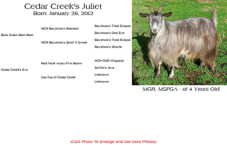 Silky Doe - Cedar Creek's Juliet