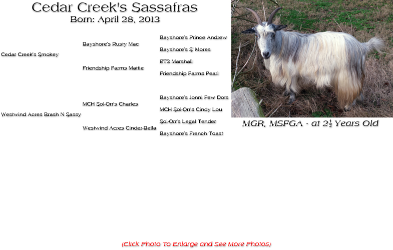 Silky Doe - Cedar Creek's Sassafras
