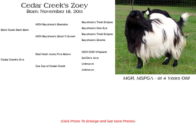 Silky Doe - Cedar Creek's Zoey